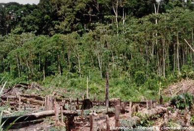 Nachhaltige nutzung regenwald